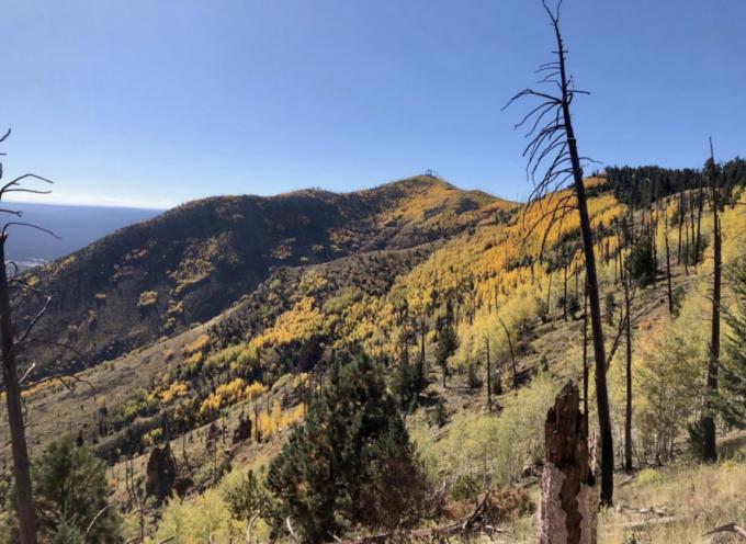 FBO's Comments on the Mount Elden Dry Lake Hills Recreation Planning Environmental Assessment